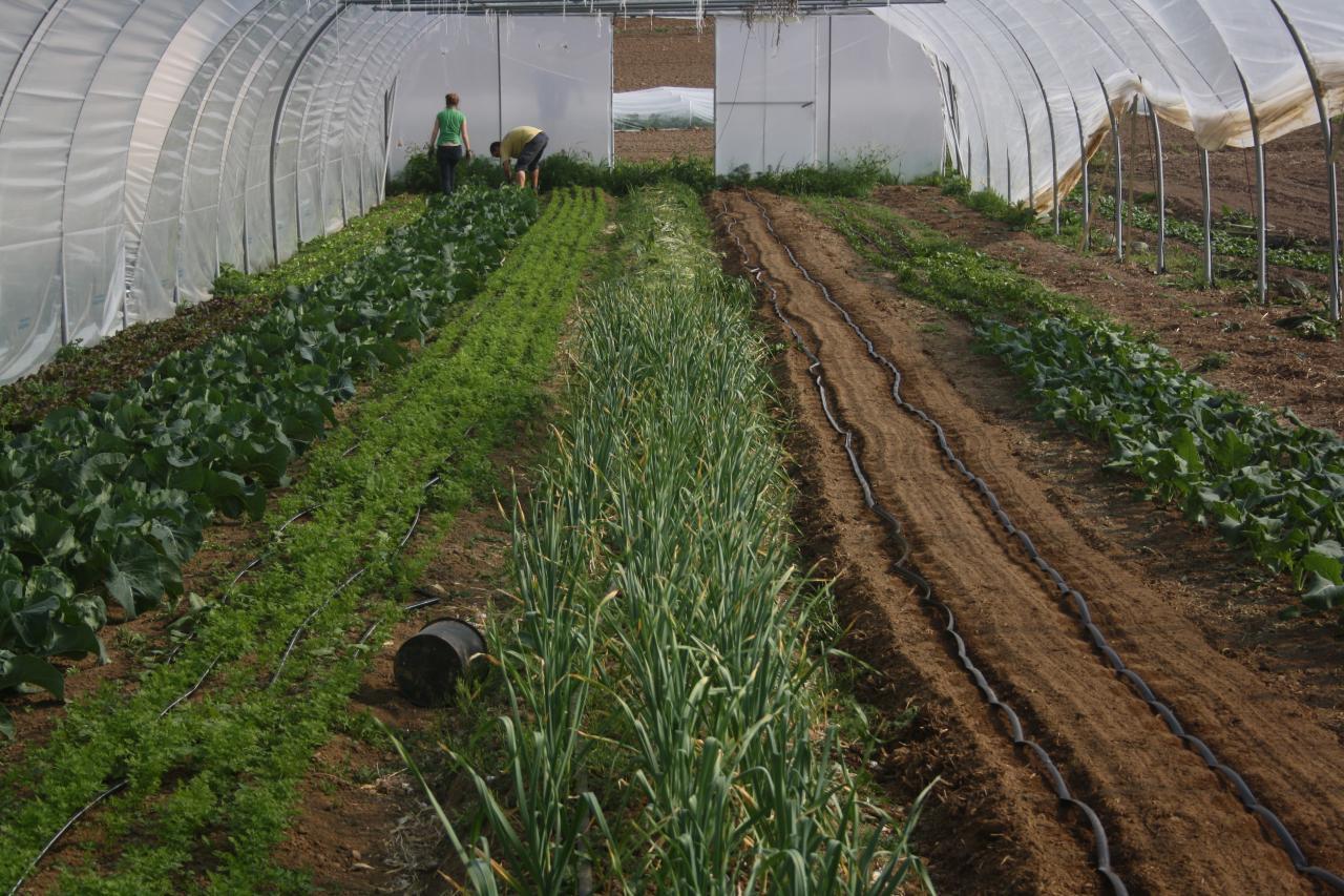 Les verdures poussent...mais les mauvaises herbes aussi!